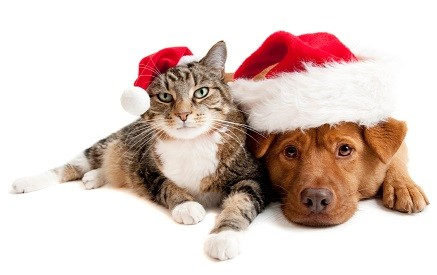 Dangerous Holiday Pet Hazards
